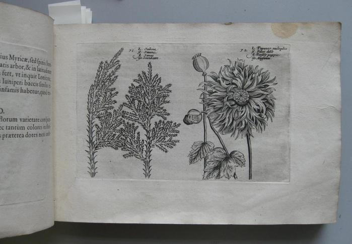 summerrose-4