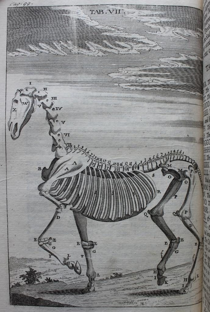 Farriery and Horses at the Edward Worth Library | Edward