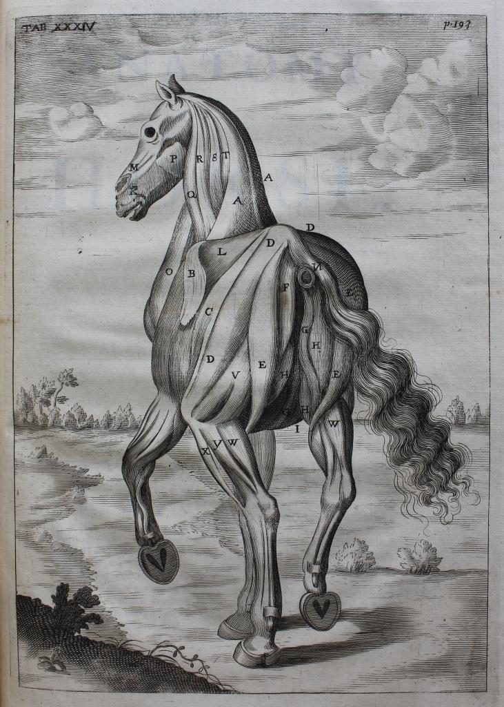 2018 August The Anatomy Of An Horse Edward Worth Library